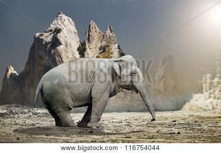 Elephant Standing In Rocky Terrain