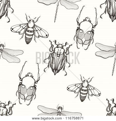Hand drawn engraving Sketch of Scarab Beetle, May bug, Bee and D