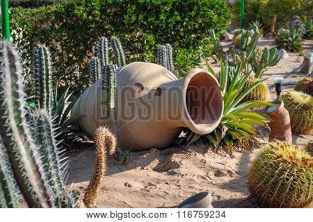 Element Of Landscape Design Clay Jug And Cactuses