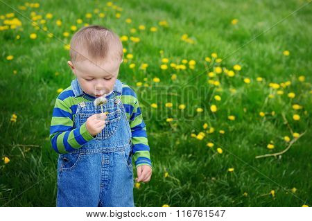 Beautiful Cute Boy In The Park Blowing On Dandelion Spring Time