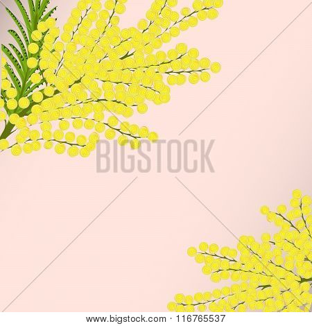 Floral background branches Mimosa