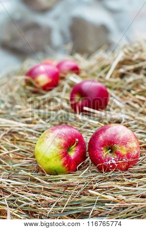 Red Apples In The Snow