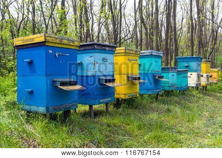 apiary in forest at spring time