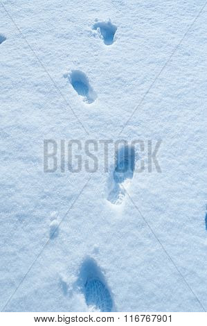 human footprints in the fresh snow in winter