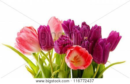 Tulips bouquet isolated on white.