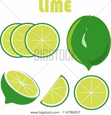 Green lime, green roots, slices on white background, hand drawing, painting
