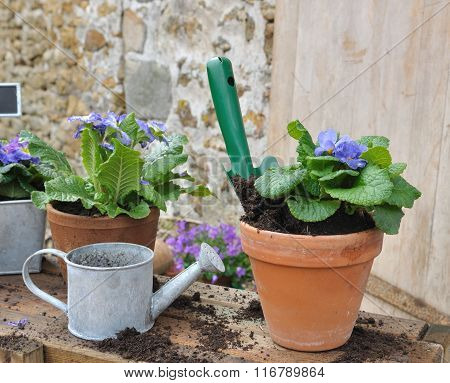 Potting Flower In Garden
