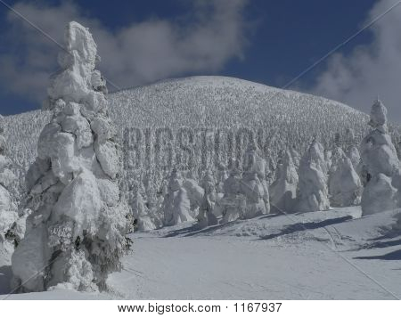 Snow-Covered Fir Trees On Mountain