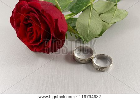 White gold wedding rings and red rose on white background