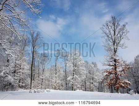 Winter Scene - Sky, Trees & Snow