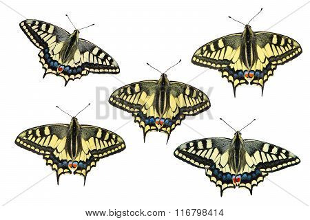 Butterflies on a white background - photo 1