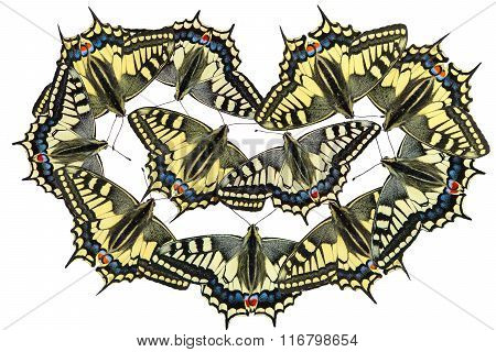 Butterflies on a white background - photo 2