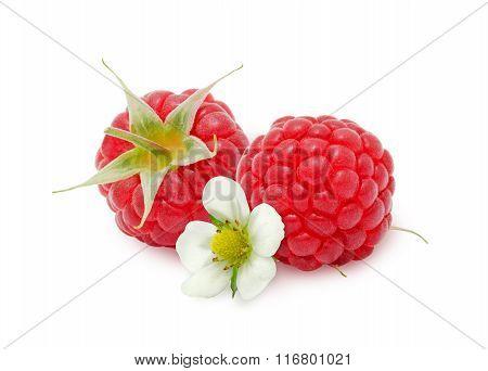 Two fresh raspberries flower.