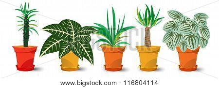 five pots with plants