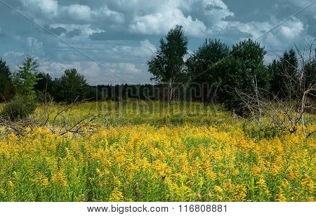 Yellow flowers on a green meadow