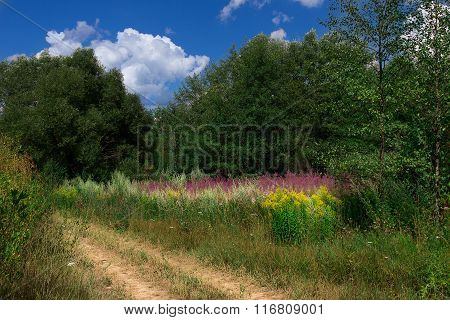 Field grassovergrown flowers summer