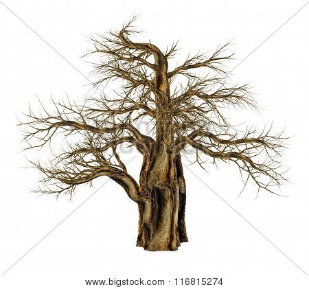 Baobab tree without leaves, adansonia digitata - 3D render