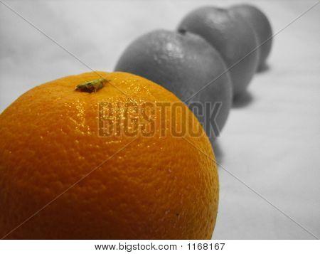 Row Of Oranges 3