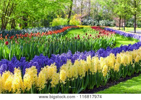 Hyacinths and tulips in the Keukenhof Garden, Netherlands