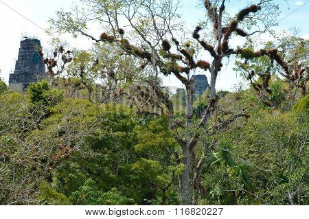 Rich Vegetation And The Top Of The Ancient Maya Temples In Tikal National Park, Guatemala