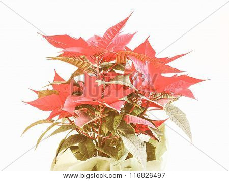 Retro Looking Poinsettia Christmas Star