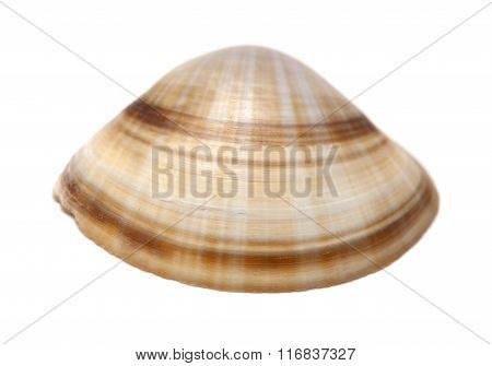 Clam Shell Isolated