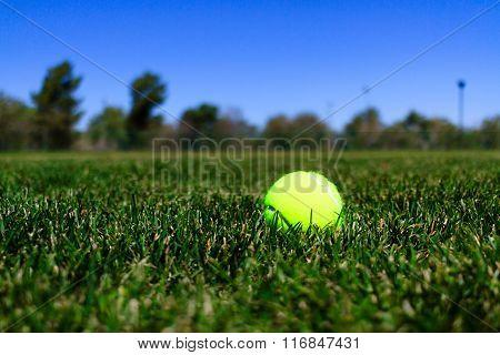 Tennis Ball In A Field In California Mountains