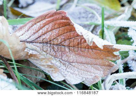 Patterns On A Frozen Leaf