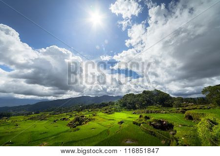 Green rice field in a mountains of the island of Sulawesi, Indonesia