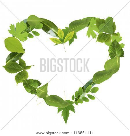 Heart of different  green  leaves, isolated on white