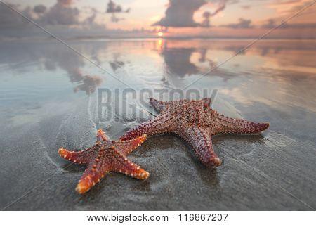 Two starfish on summer beach at sunrise