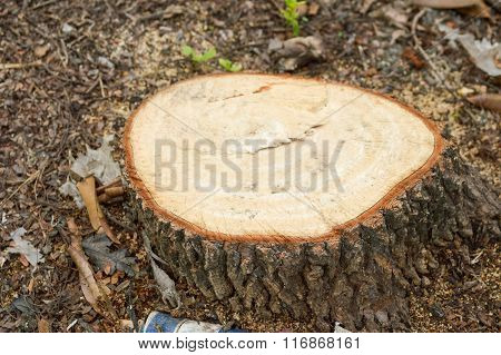 dry stump tree in garden