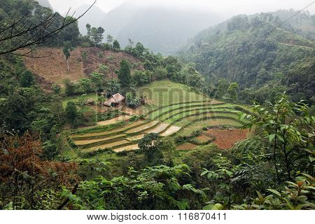 Terraced rice field with traditional farmhouse