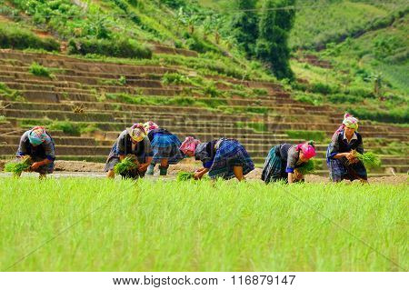 he unidentified farmers do agriculture job on their fields