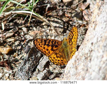 Beautiful brown butterfly - photo 2