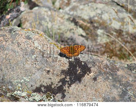 Beautiful brown butterfly - photo 3