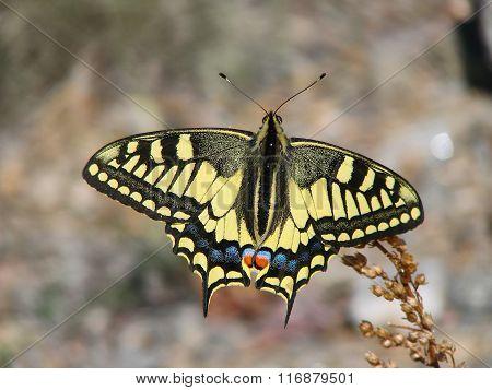 Beautiful yellow butterfly - photo 7