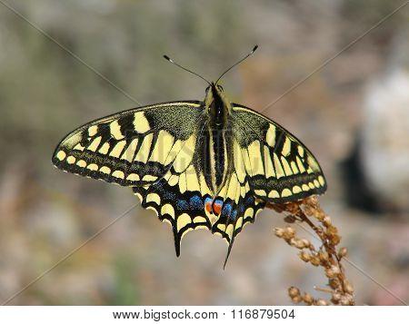 Beautiful yellow butterfly - photo 8