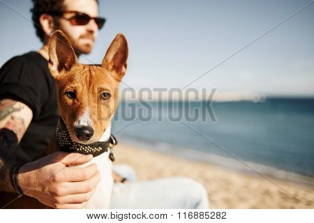 Close Up Portrait Dog Breed Basenji Sitting At Sand And Looking In Camera Enjoying Sun In Barcelona.