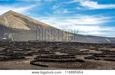 large vineyards near volcanic mountains in Lanzarote, Canary Islands, Spain