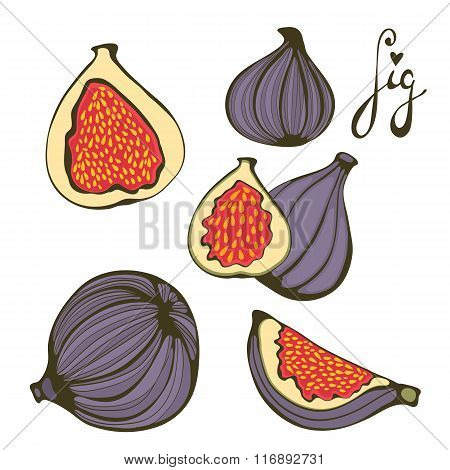 Hand drawn figs