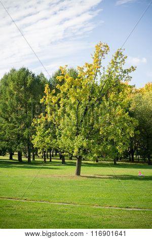 Sunny City Park