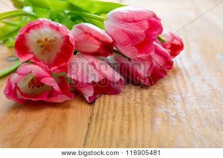 Pink tulip bouquet isolated .