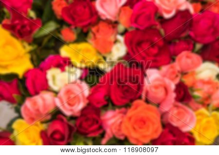 Blurred bunch of roses