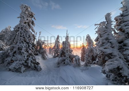 Winter Landscape. Sunrise In The Mountains. Beautiful World. Christmas Scene. Carpathians, Ukraine,