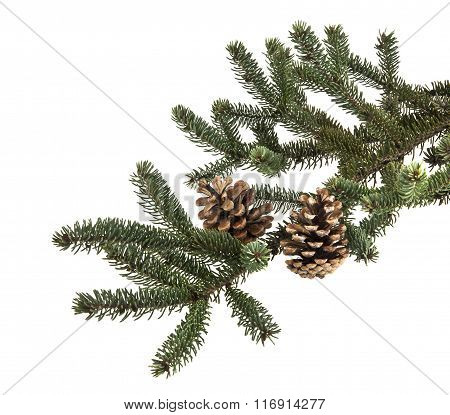 Christmas Tree Branch With Pine Cones Isolated On A White Background