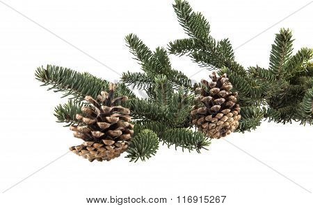 Christmas Tree Branch With Pine Cones
