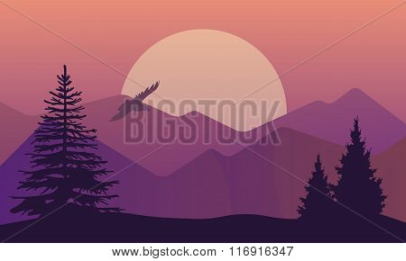 Vector illustration of landscape in north areas, evening dusk with pine forest on the rocks. Scenic
