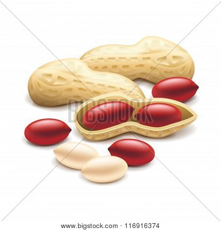 Peanuts Isolated On White Vector
