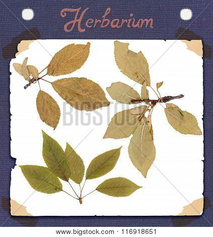 Herbarium Of Various Plants